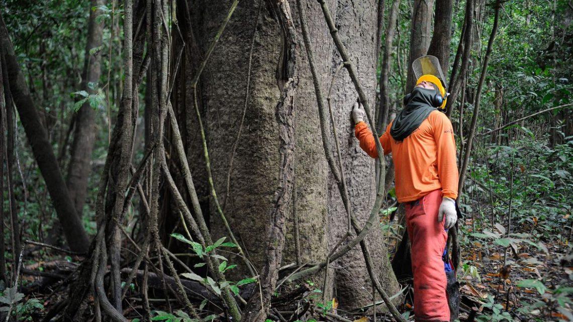 Florestas entram em lista de concessões à iniciativa privada